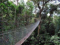 Jungle01