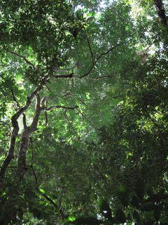 Jungle03
