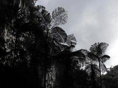 Jungle05b