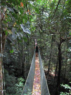Jungle06