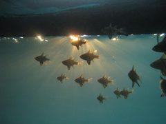Diving08