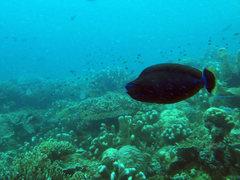 Diving16b