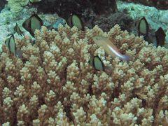 Diving35