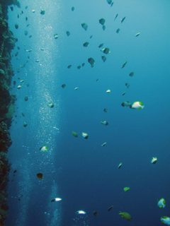 Diving42