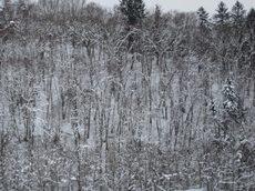 Snow020