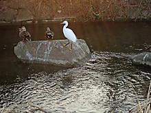 Duck03
