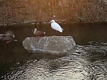 Duck05
