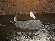 Duck06