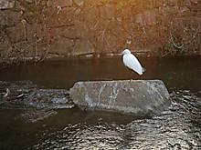 Duck08