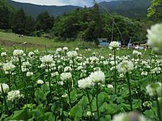 2013mayflower16
