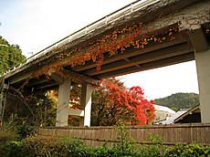 2008sagano_28