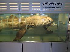 Okinawa2013nov_29