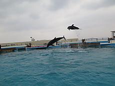 Okinawa2013nov_34