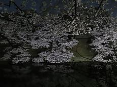 Chidorigafuchi01