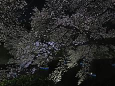 Chidorigafuchi03
