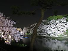 Chidorigafuchi12