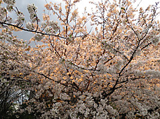 Tamagawa04