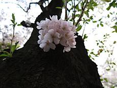 Tamagawa05