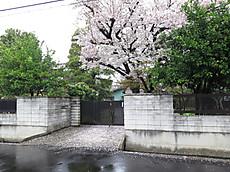 Tamagawa07