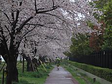 Tamagawa10