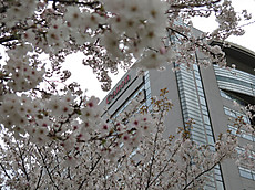 Tamagawa14