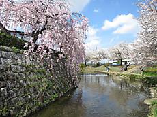 20140406sakura02