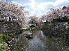 20140406sakura09
