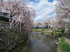 20140406sakura10