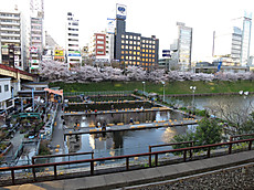 20140406sakura19