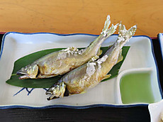 Gifu_uodu015