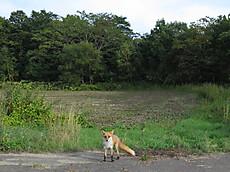 Hokkaido2015_034