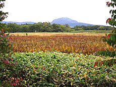 Hokkaido2015_035