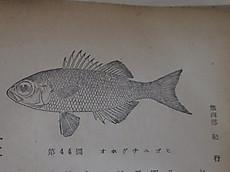 Tanzawa2016oct35_3