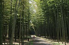 Bamboo05_2