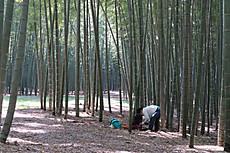 Bamboo06_2