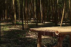 Bamboo17