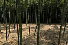 Bamboo25