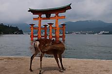 Itsukushima_22