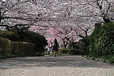 Chidorigafuchi11