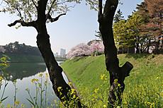 Chidorigafuchi16