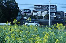 Nanohana23