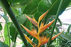 Tahiti008