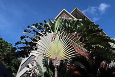 Tahiti010