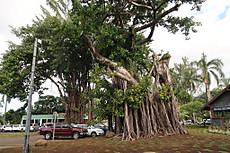 Tahiti054