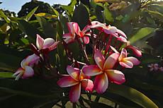 Tahiti057