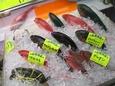 Okinawa_656