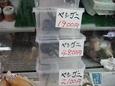 Okinawa_667