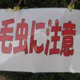 Shidukawa195