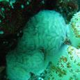 Palau_1394