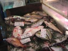2005tsukiji_market-16